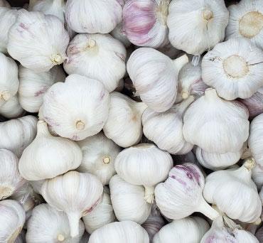 fresh-garlic-from-peru-fields-packing-to-export