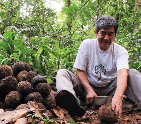 brazil-nut-produc-export