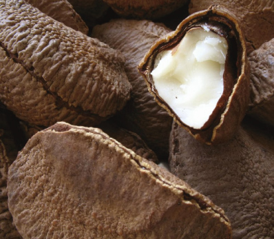 brazil-nuts-high-price-pandemic-to-export